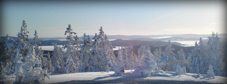 Snowmobile Morningtour 1290 SEK
